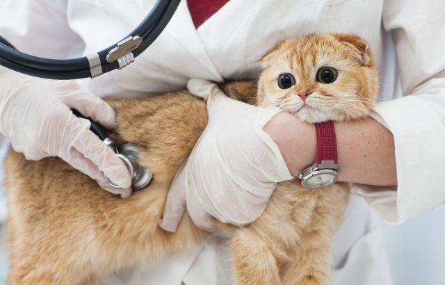 【読者体験談#96】動物看護師になるのが夢で叶えたのに、辞めてしまったワケとは